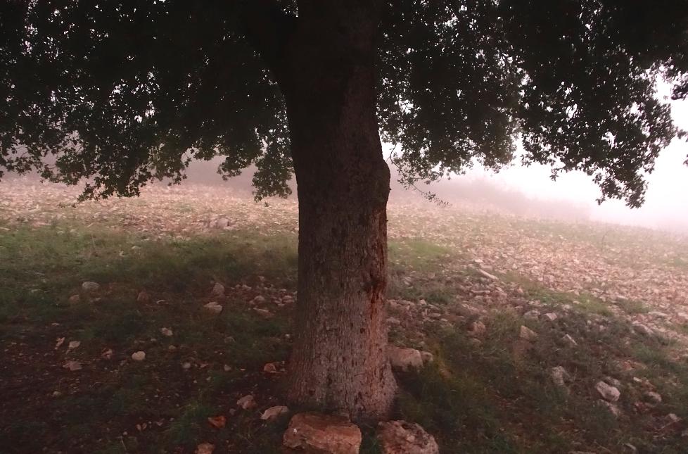 L'arbre du vignoble