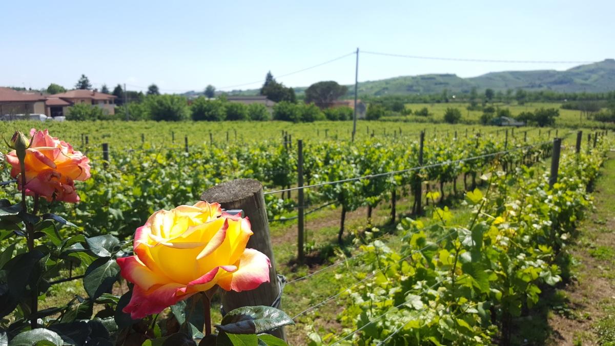 Italie: Les vins de Soave - petit aperçu #1