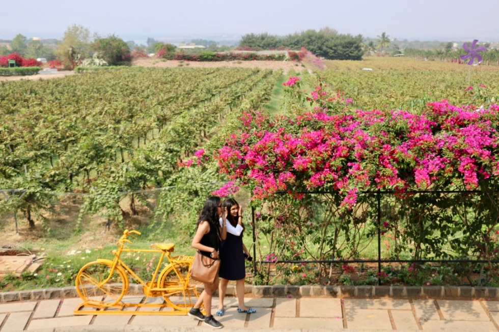 Sula Vineyard.jpg