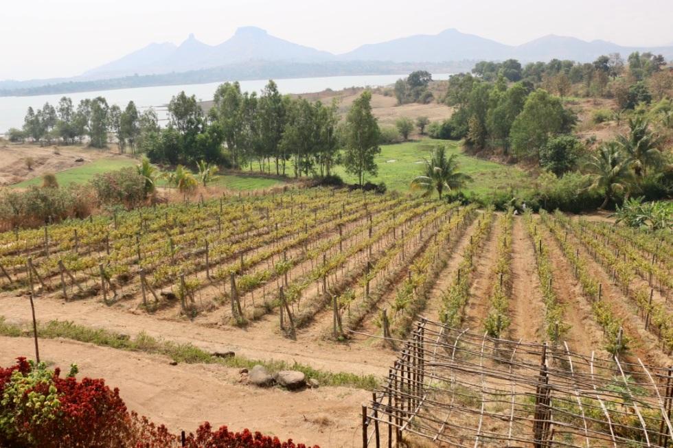 Valonné vineyards.jpg