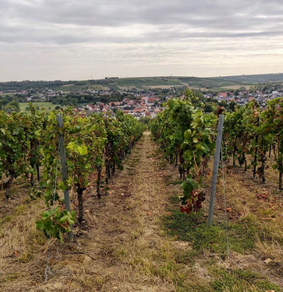 Weingut Eppelmann.jpg